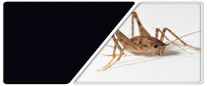 Best Pest Control In Middletown NJ